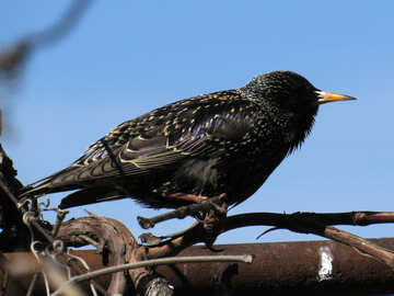 Bird at the start №23990