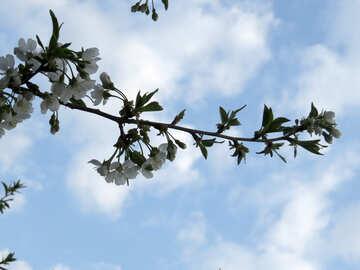 Flowering branch №23940