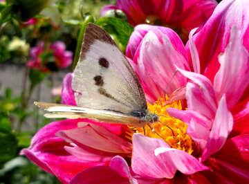 Butterfly on flower №23427