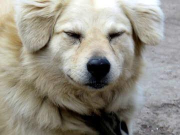 A dog`s life №23936