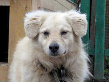 Patrol dog №23937