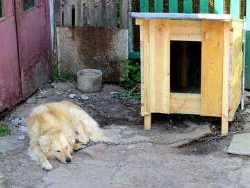 Canine angle №23883