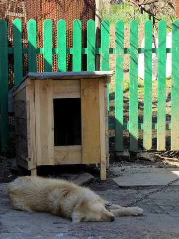 Dog house №23877