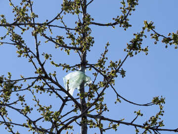 Plastic bag stuck in tree №23975