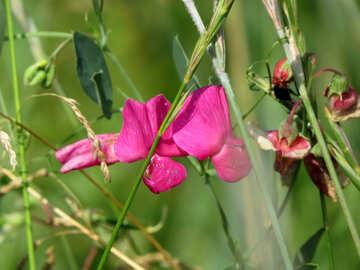 Flower Field №23043