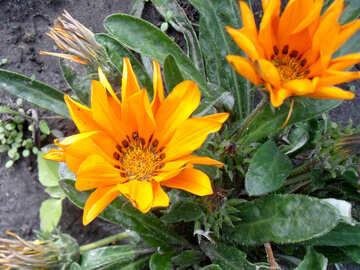 Gelbe Blumen №23382