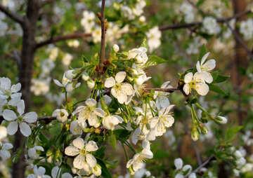Il giardino di primavera №23946