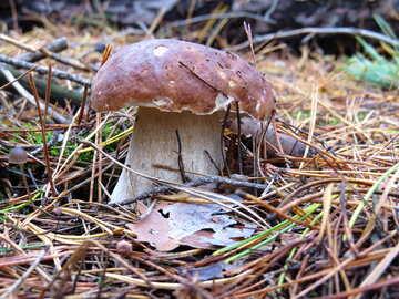 White mushrooms №23237