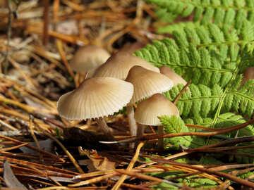 Mushrooms №23141