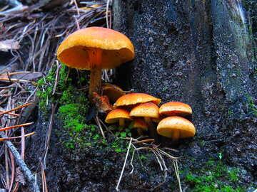Mushrooms №23243