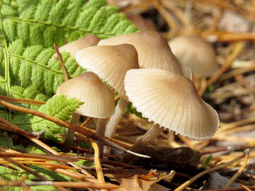Beautiful Mushrooms №23142