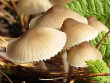 Funghi selvatici №23143