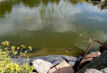 Swimming pond №23399