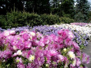 Die Zeichen von Blumenbeet №23406