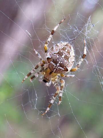 Spider №23113
