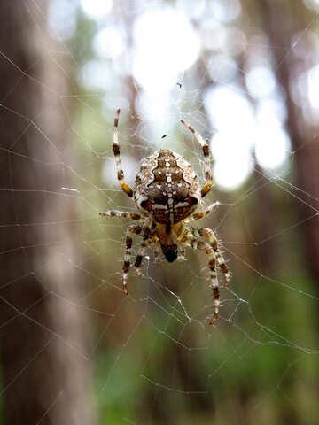Big spider №23112
