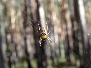 Spider in the web №23274