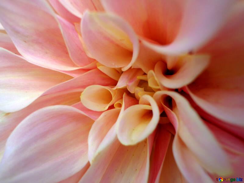 Fondo en flor №23435