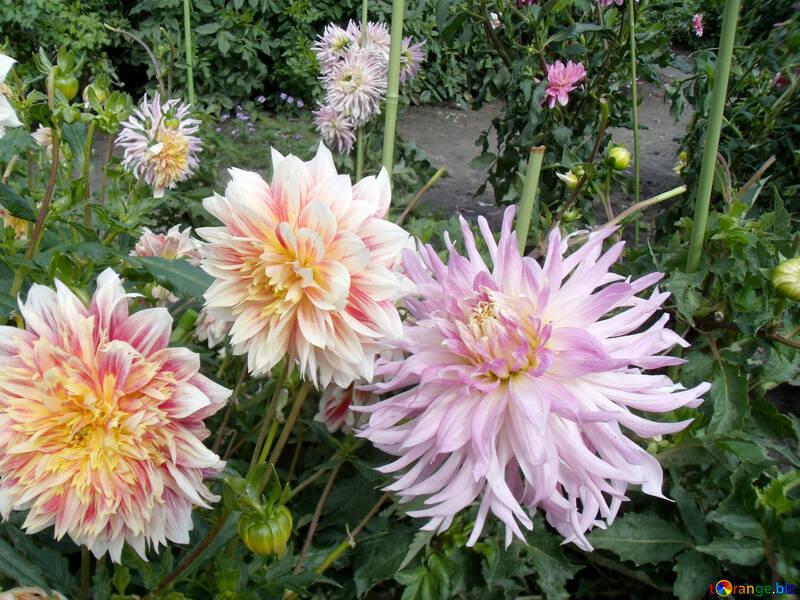 Jardín de otoño №23395