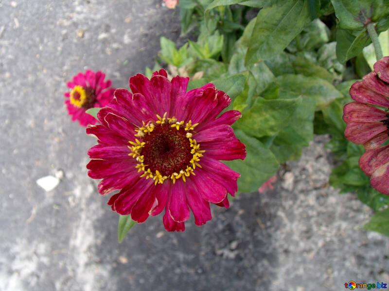Gartenblume №23400