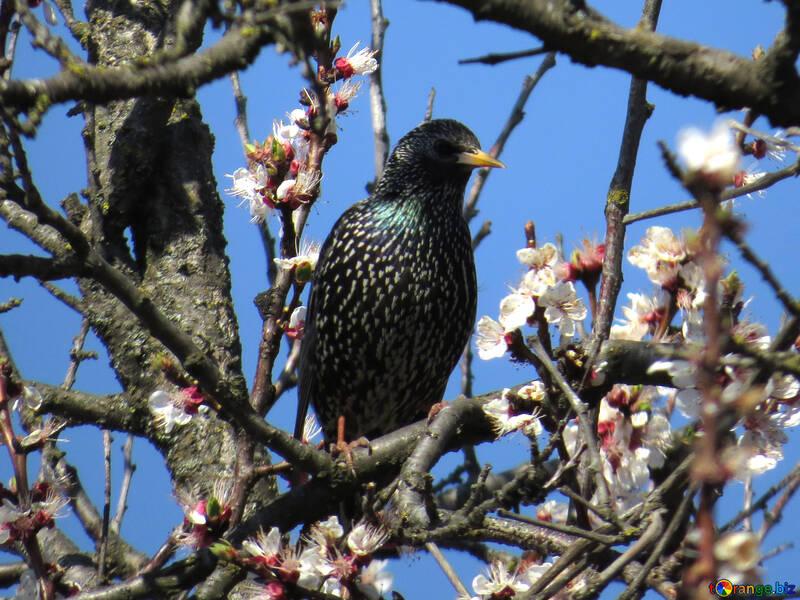 Spring birds singing №23980