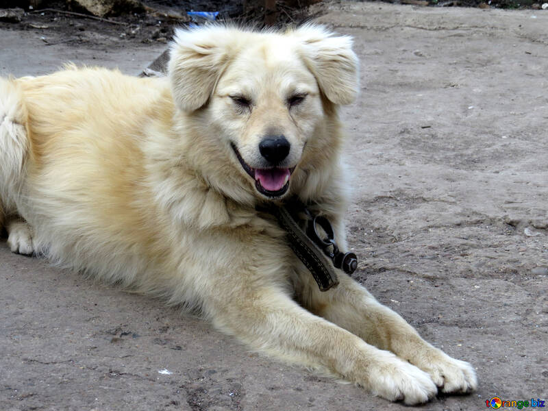 Breed dog on chain №23935
