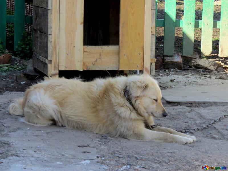 La vida es perro de cadena №23878