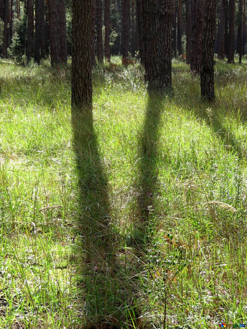 Shade from trees №23280