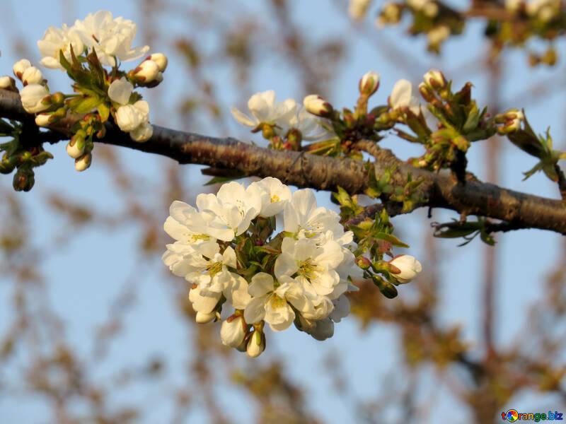 Период цветения сада №23909
