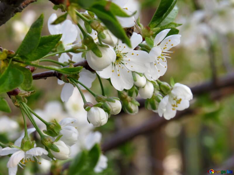 Frühling liegt in der Blumengarten №23947