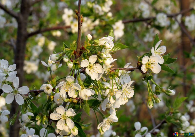 Весенний сад №23946
