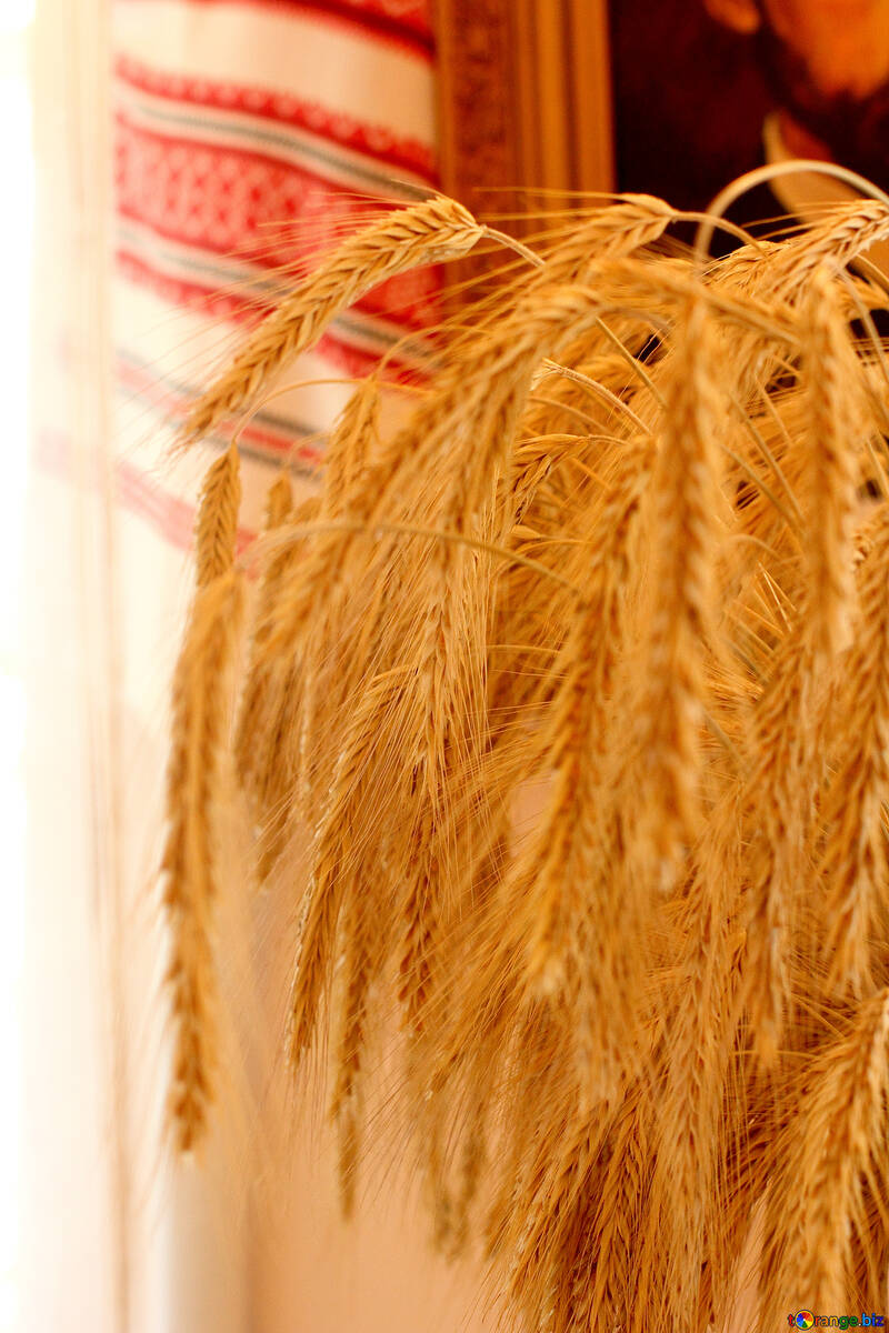 Bouquet of spikelets on the background of towel №23490