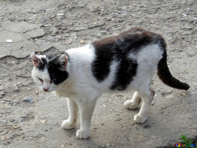 Sick cat №23939