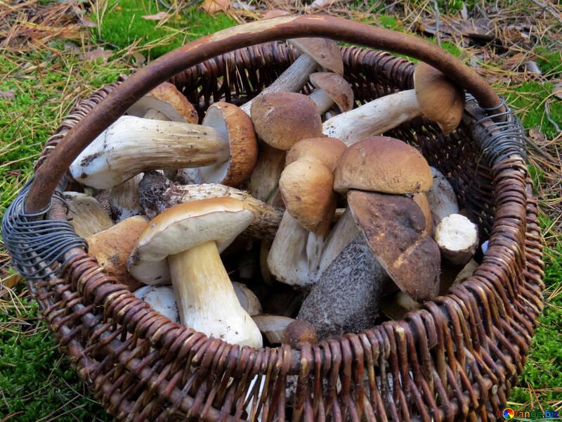 Корзина грибов №23260