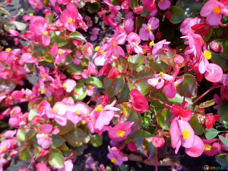 Fleurs étranges №23458