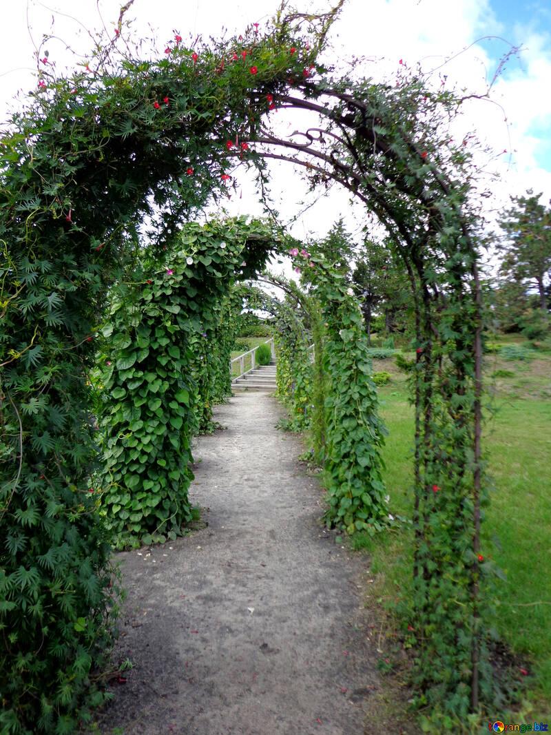 Giardino arco di viti №23419
