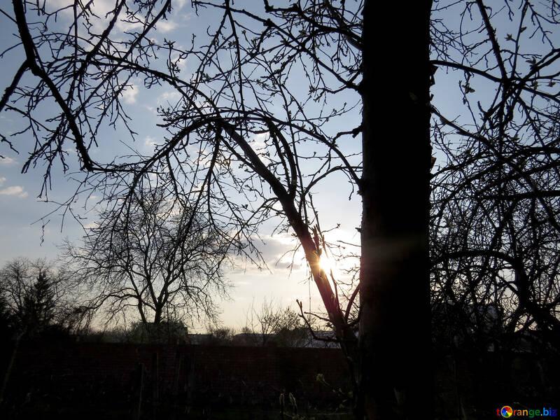 Sunset Tree №23925