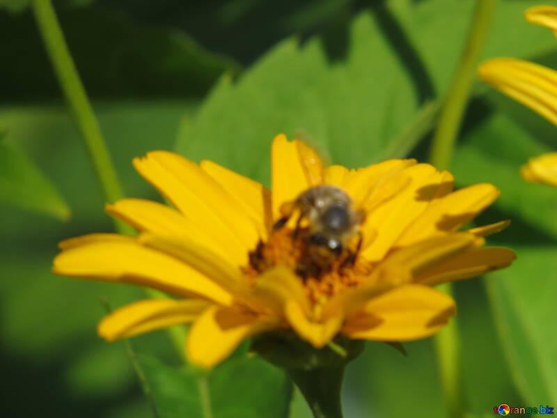 Цветок в расфокусе №23038
