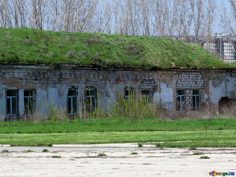 La hierba en el tejado №23543