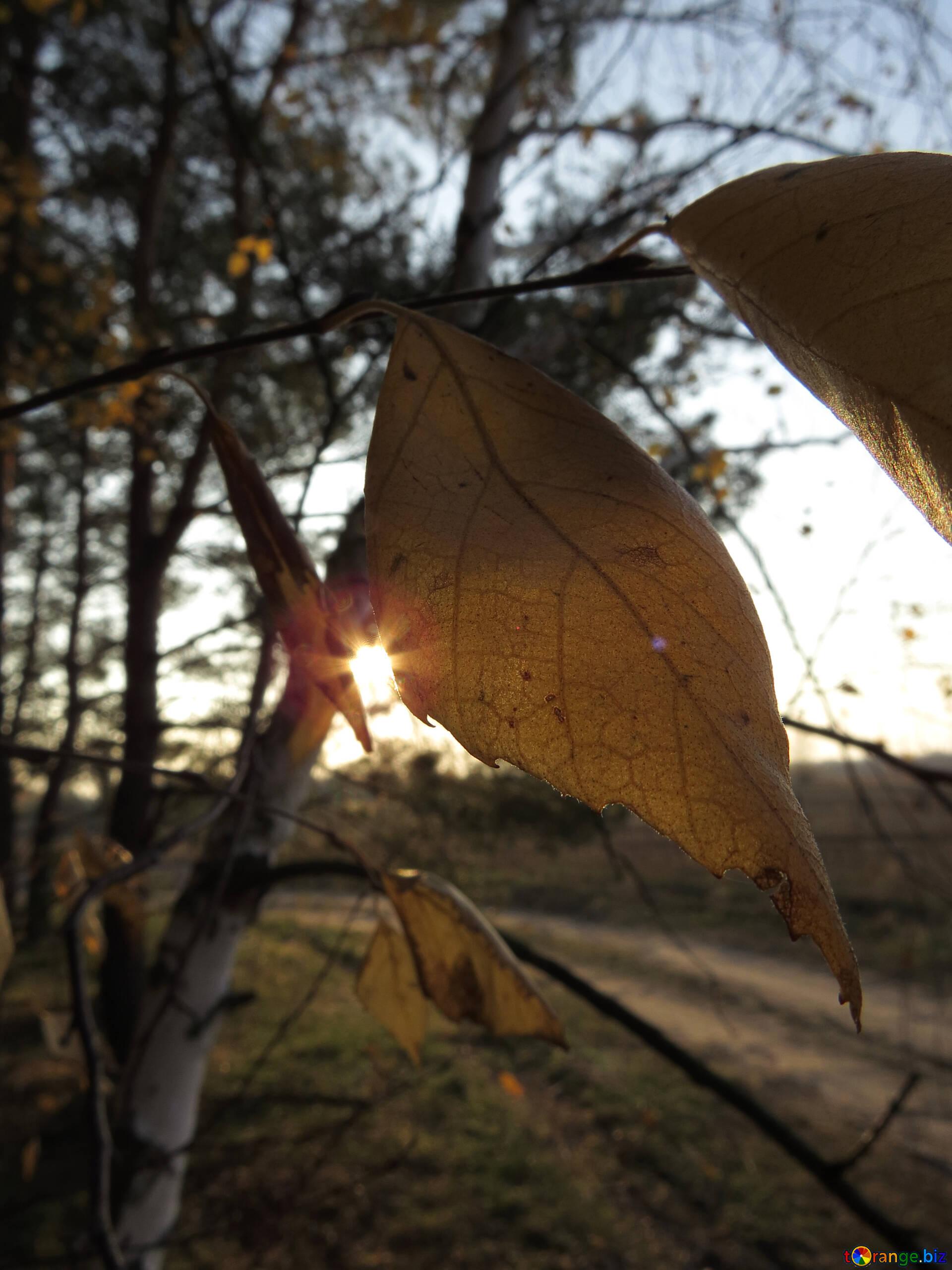 Herbstwald Herbst Gedichte Laub 24752