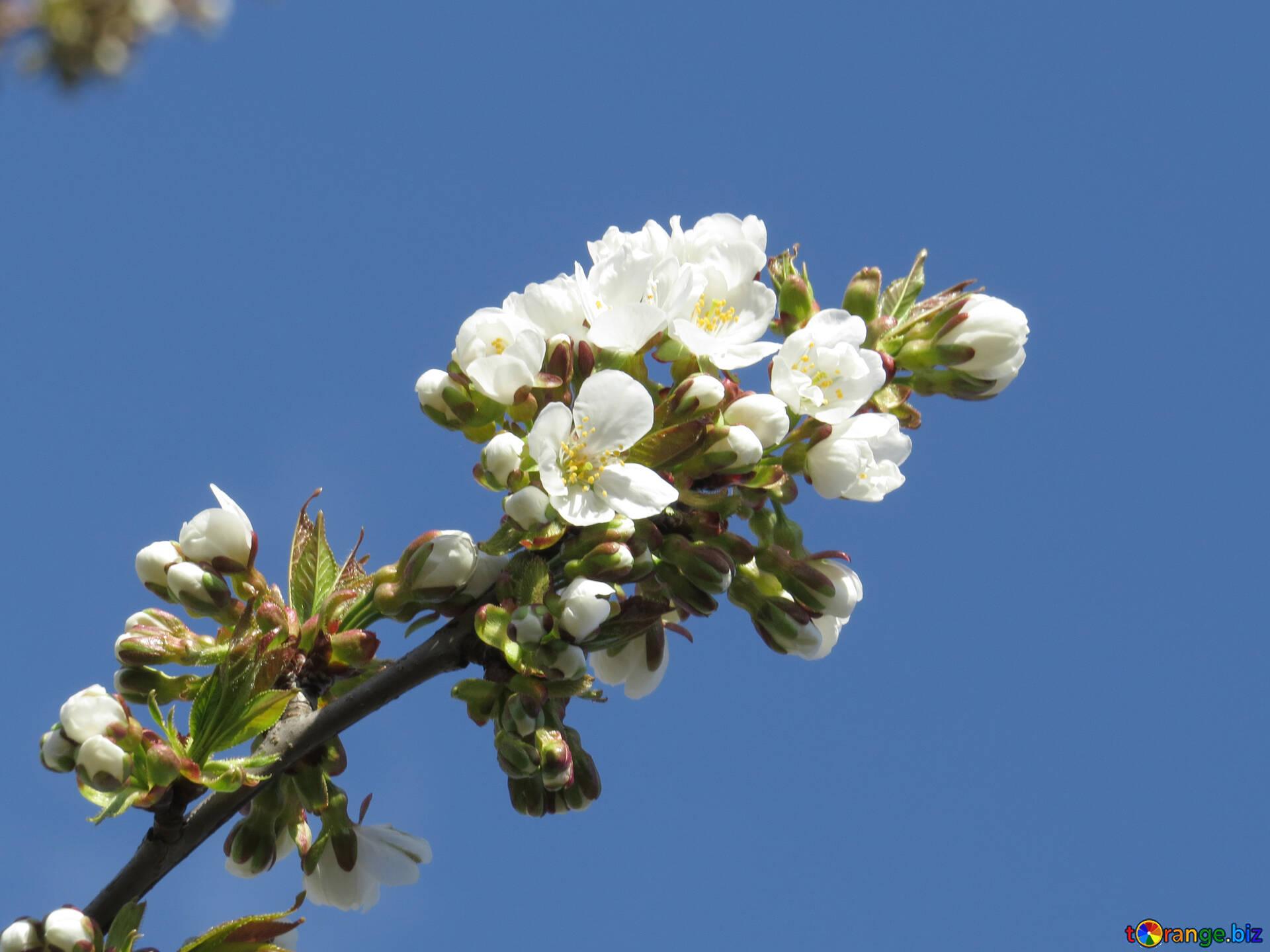 Spring Flowers Spring Flowers Spring 24415