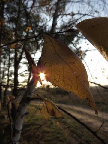 Autumn Poems №24752