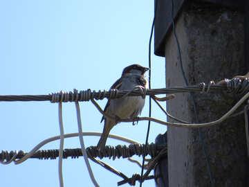 Bird on an electric pole №24389
