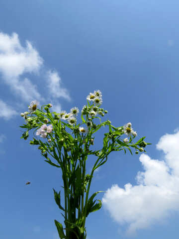 Bouquet on background of sky №24914