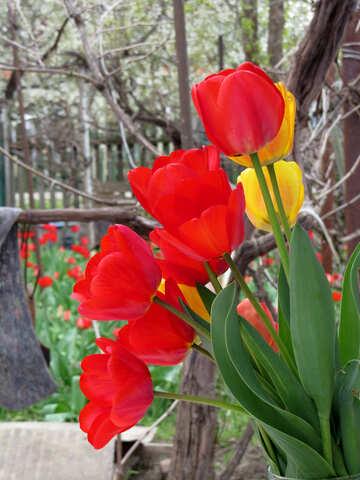 Spring Bouquet №24136