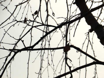 Autumn grayness №24784