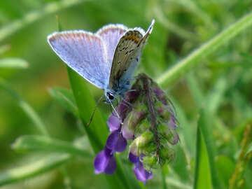 Butterfly №24641