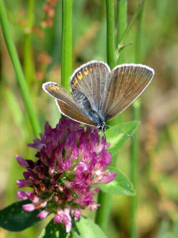 Butterfly №24647