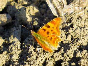 Butterfly on earth №24371