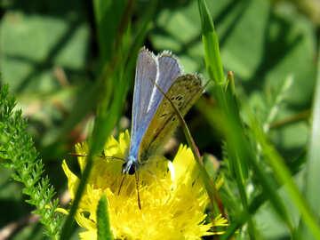 Butterfly eyes №24998